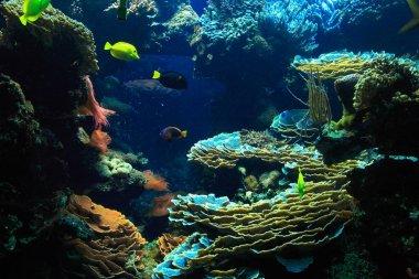 Deep Water Aquarium Underwater Landscape