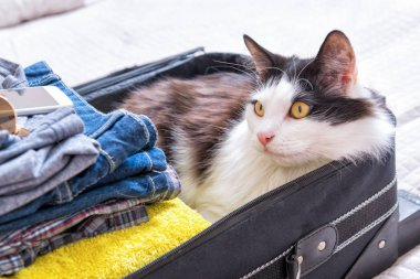 Cat sitting in the suitcase