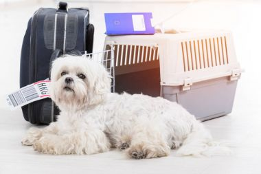 little dog and the airline cargo pet carrier