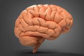 3D ilustrace lidského mozku z hlíny na tmavém pozadí s měkkým stínem.