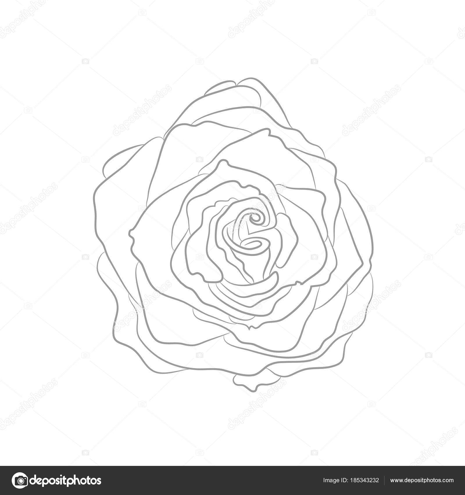 Vektor-Zeichenprogramm Kontur Rose für Malbuch — Stockvektor ...
