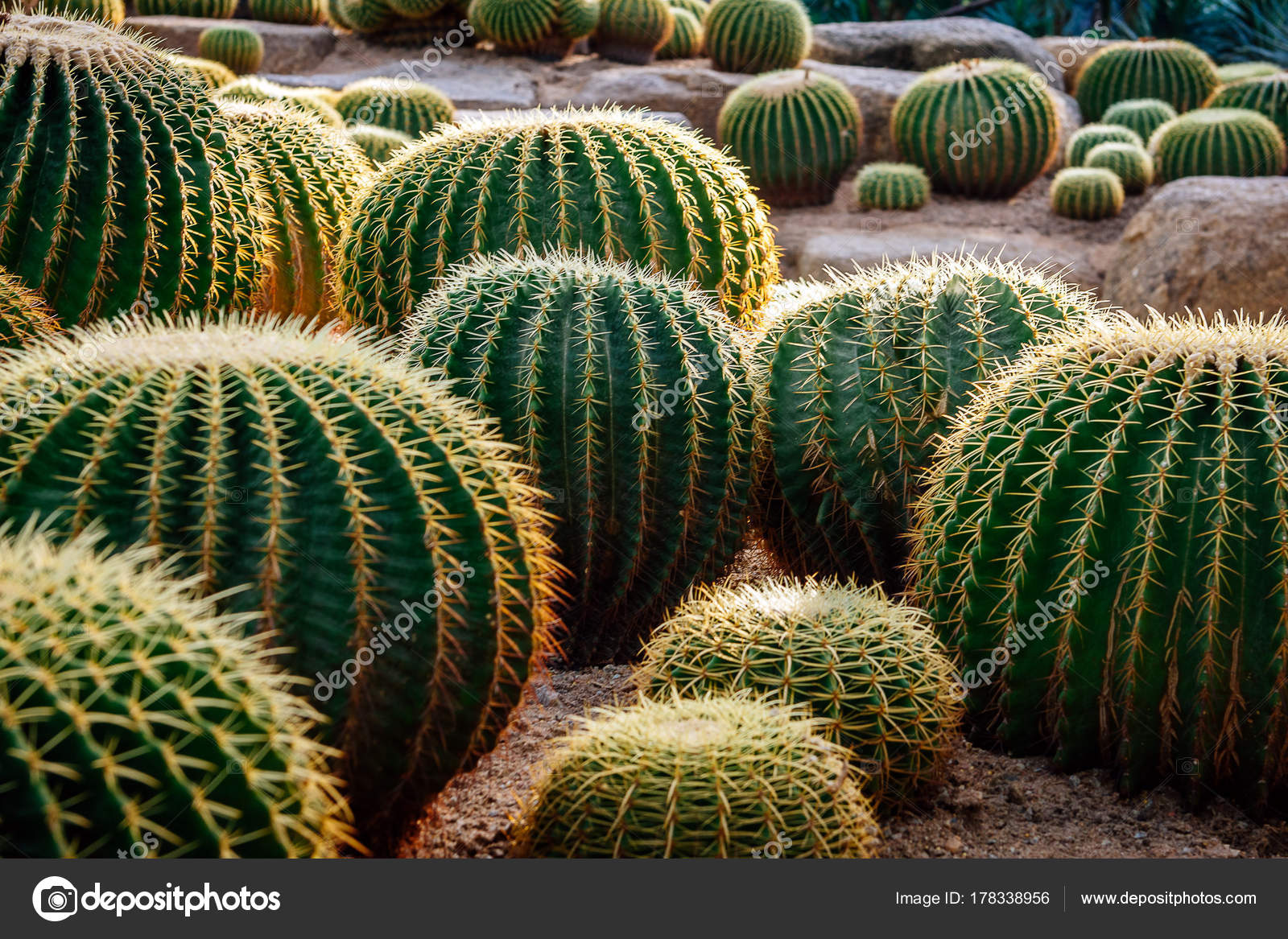 Photos Cactus Garden Design Landscape Design Cactus Garden