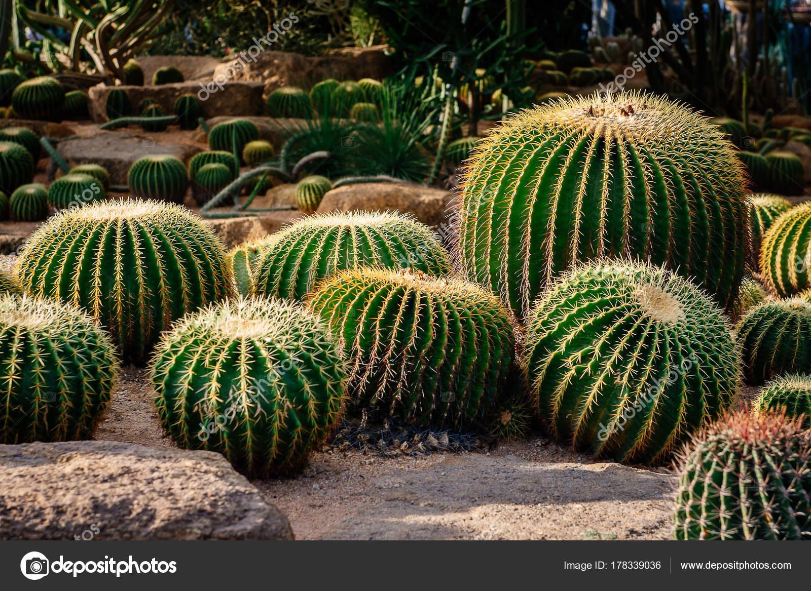 Landscape Design Cactus Garden Stock Photo C Dmytrotomson