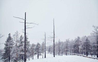 """Картина, постер, плакат, фотообои """"живописный зимний пейзаж. вид на деревья со снегом. концепция минималистского спокойствия . картины пейзаж море"""", артикул 324197422"""