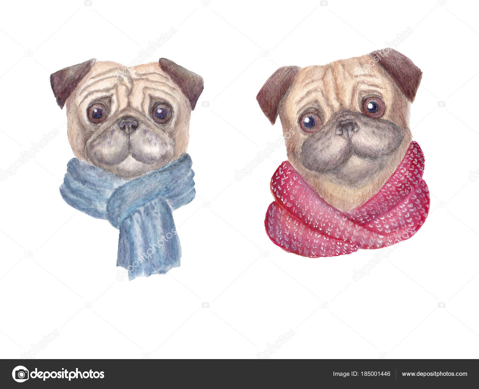 d566bc23 Watercolor Pug Dogs Scarves Hand Drawn Illustration Isolated White  Background — Stock Photo