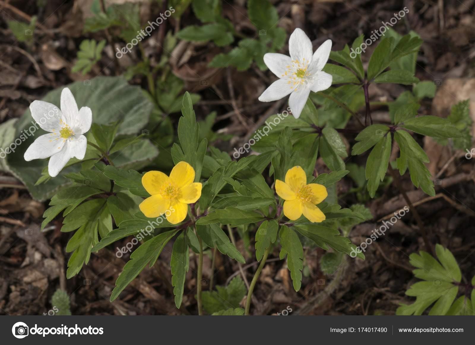 INDIGO DIY желтый один цветок анемона Орхидея Тюльпан 84