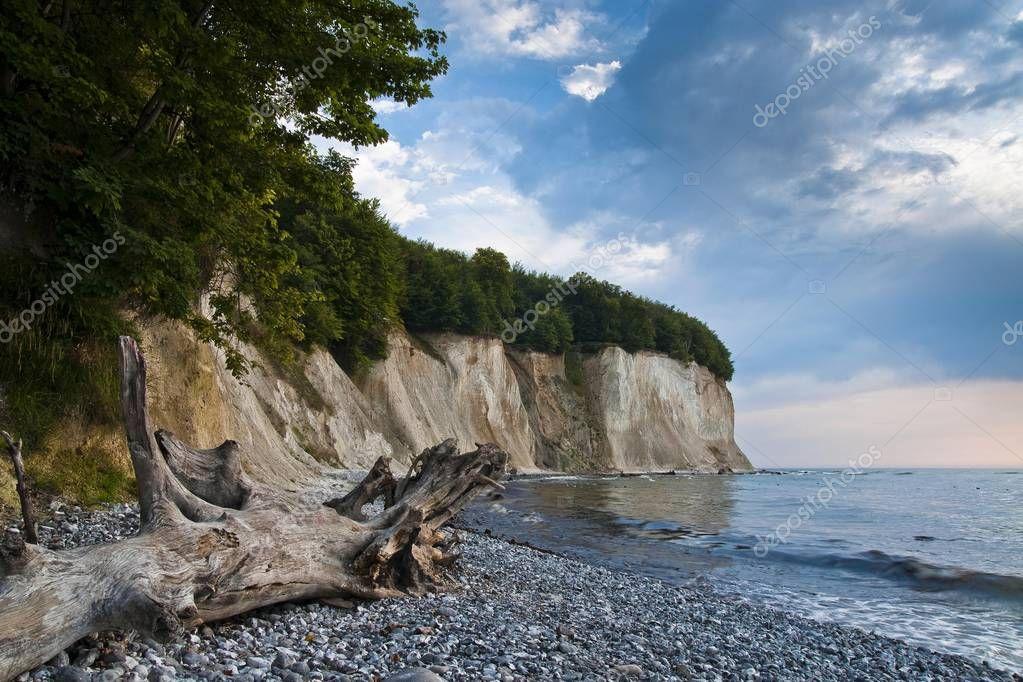 Driftwood on a chalk beach, Jasmund National Park, Ruegen, Mecklenburg-Western Pomerania, Germany, Europe