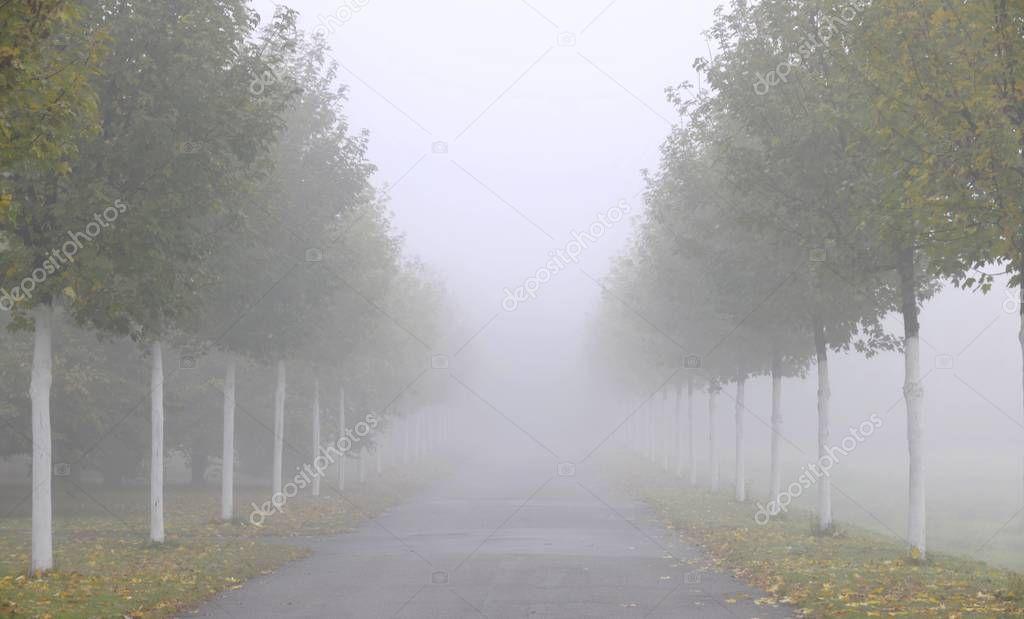 Avenue in autumn fog, Stuttgart, Baden-Wuerttemberg, Germany, Europe
