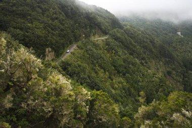 Garajonay National Park, Tree heath forest, La Gomera, Canary Islands, Spain, Europe