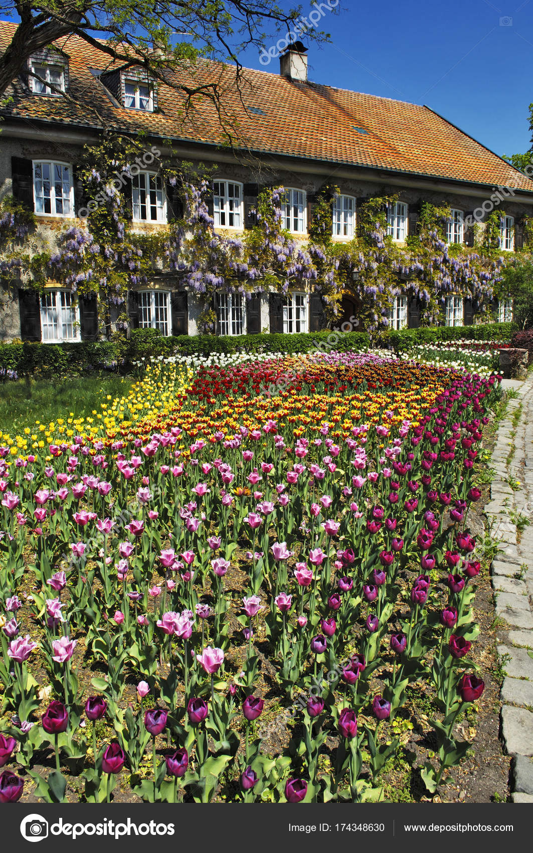 Garden Tulips Flowers House Bavaria Germany Europe — Stock Photo ...