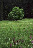 Fotografie Wiese mit Baum, Sommersaison