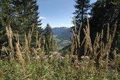 Fotografie Blick von der Ringspitz ins Tal Rottach am Tegernsee-Bayern-Deutschland