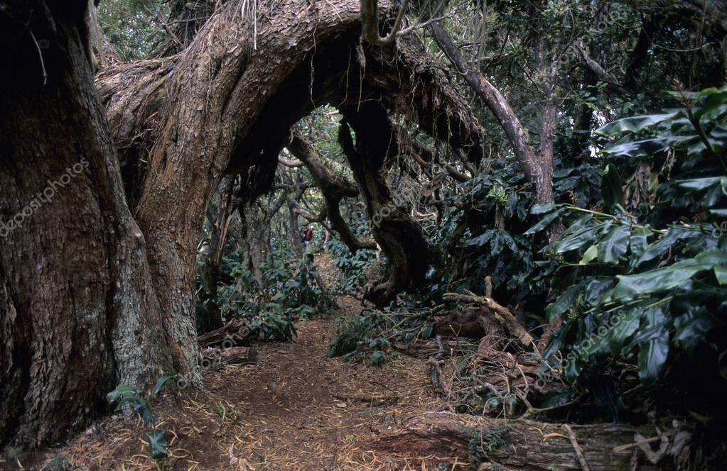 Fort des Fougres Rainforest, Runion, France, Europe
