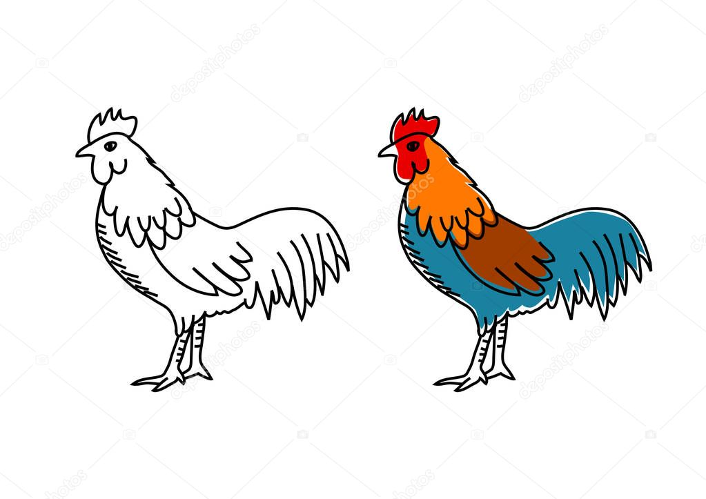Rooster drawing on white background — Stock Vector ...