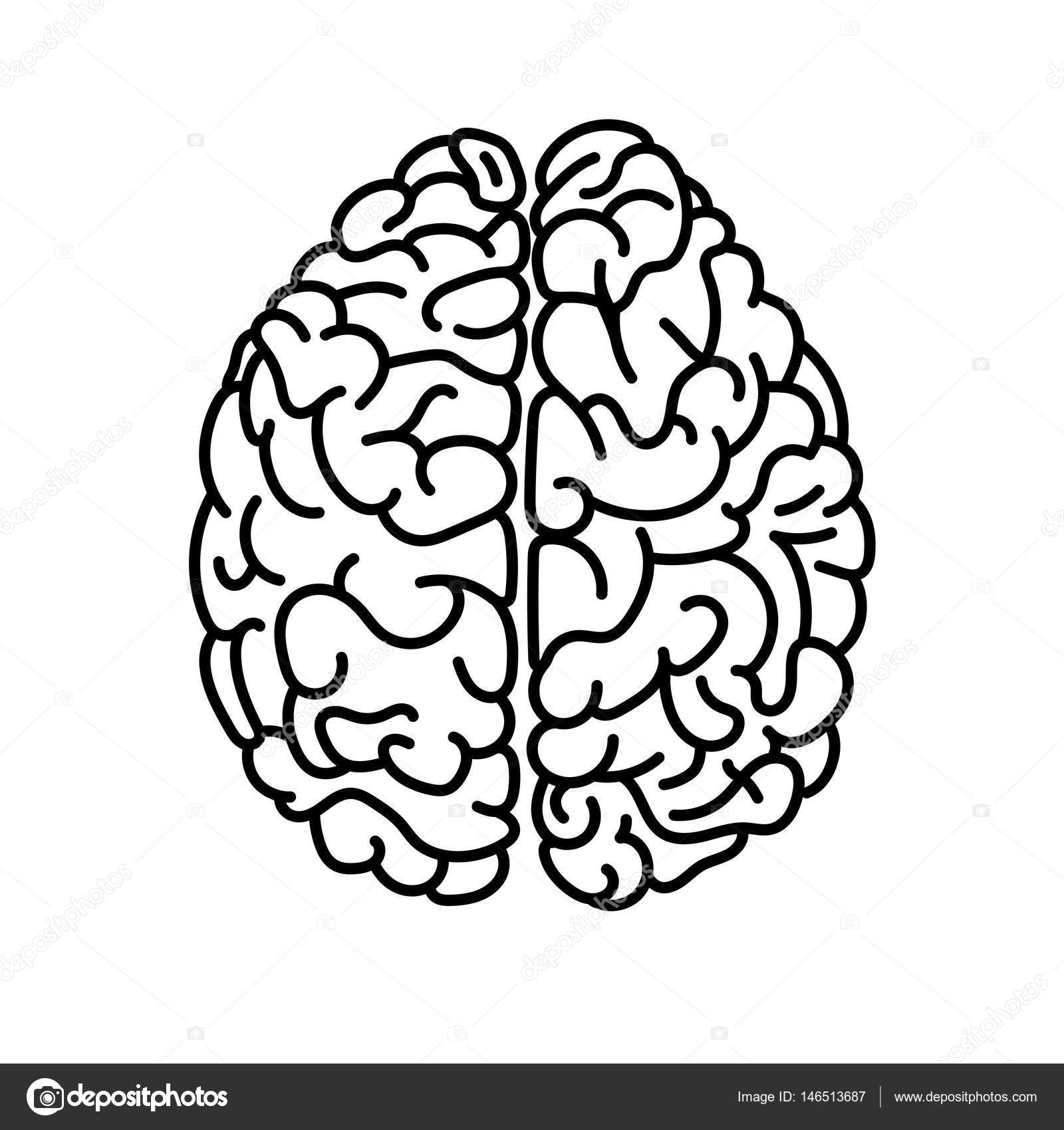 Flat style human brain top view doodle illustration ...