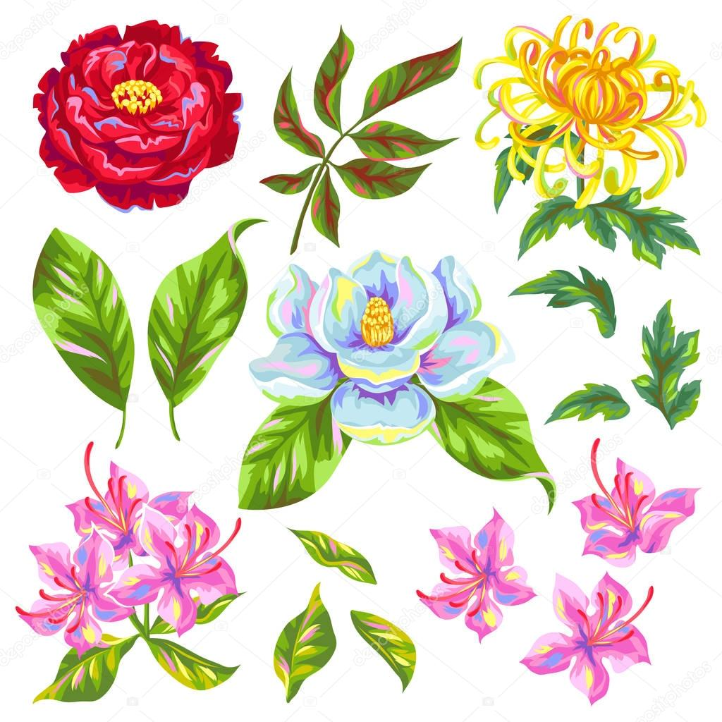 China flowers set. Bright buds of magnolia, peony, rhododendron and chrysanthemum
