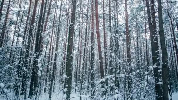 Téli hó erdő piros napos lámpák a fák