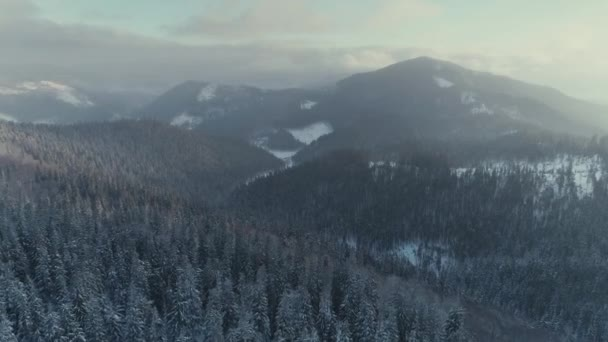 Zimní sněhová borovice lesní sunrise DRONY letu v horách