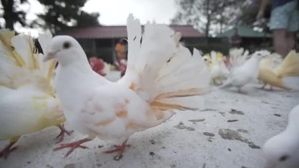 Barva holubice ptáků zoo design, fly, holub, symbolu, křídlo, pozadí