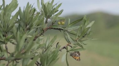 pillangók hegyi természet zöld fák növény, virág, állat
