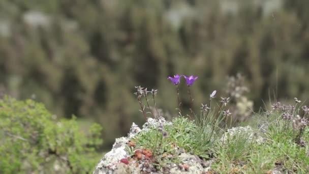 květiny v kameny květiny, příroda, bílá, zdraví, přírodní, klid, abstraktní