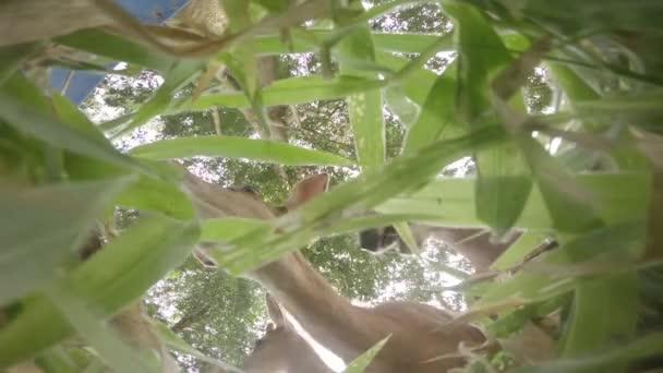 Jelena jí příroda, roztomilý, zelené, volně žijících živočichů, zvířat, divoký, savec, jíst