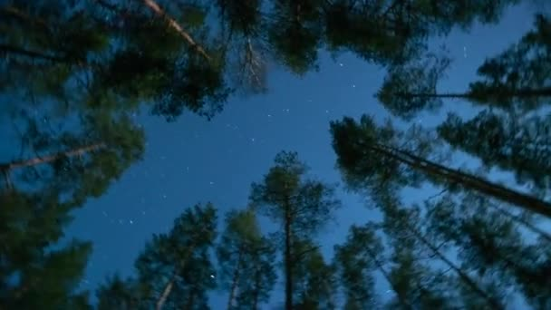 Forest Timelepse Pines Stars sky Timelapse motion, deep nature