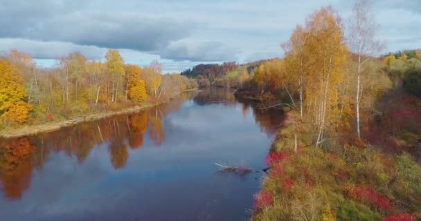 Gauja river Autumn Forest Sigulda city nature, drone flight, bridge car drive from above