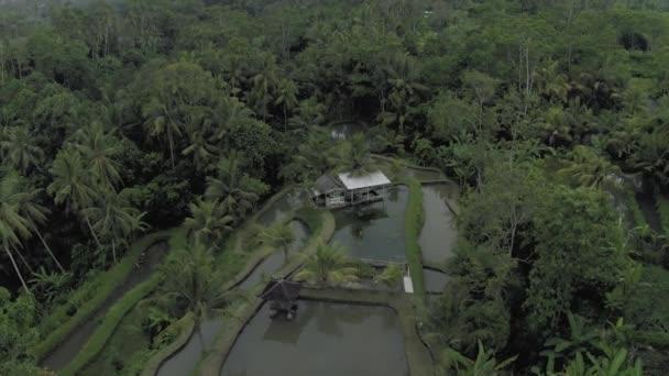 River between palm trees on Bali Island 4K drone flight