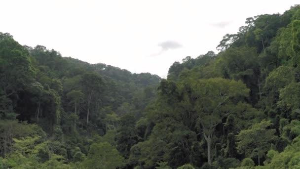 Dschungel in Asien, Insel Phuket in Thailand, 4k Drohnenschuss