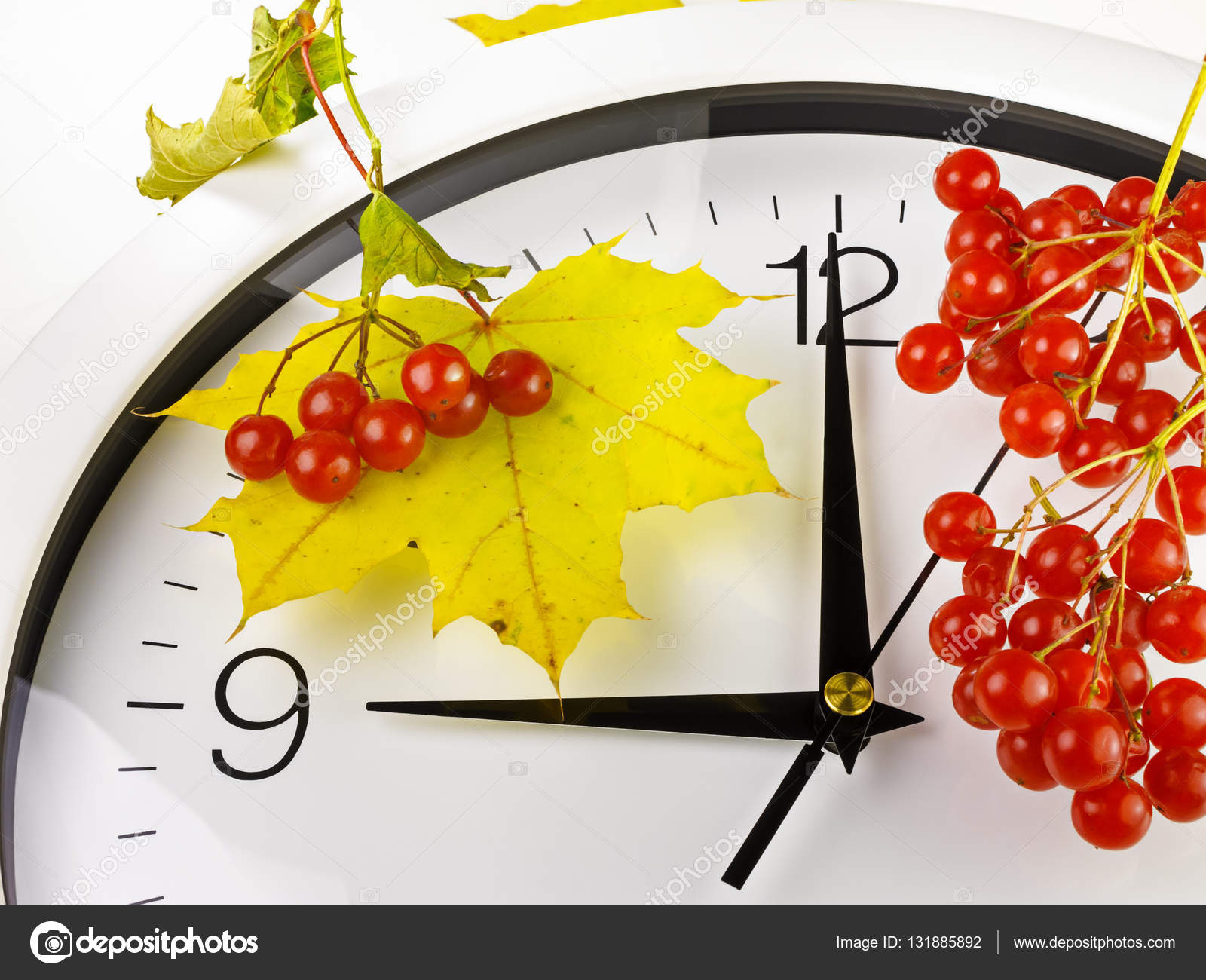 9:00. Cara de reloj con hojas amarillas y roja madura viburnum ...