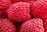 Photo Close-up of fresh ripe organic raspberries