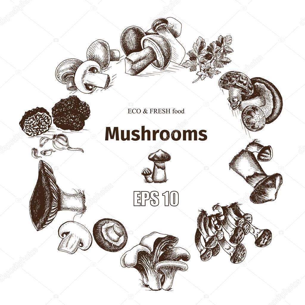 illustration sketch - mushrooms