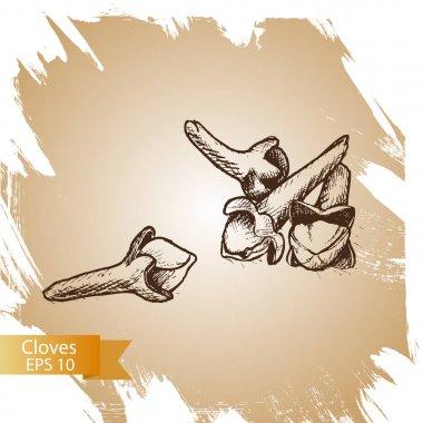 Vector background sketch clove. Illustration spices.