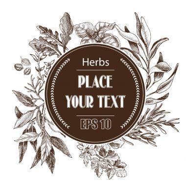 Vector background sketch herbs. Herbs - Bay leaf, dill, thyme, sage, rosemary, Basil, parsley, arugula.
