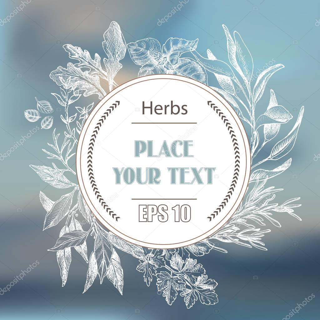 Vector background sketch herbs. Herbs - Bay leaf, dill, thyme, sage, rosemary, Basil, parsley, arugula.