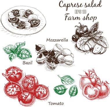 sketch of salad caprese food card
