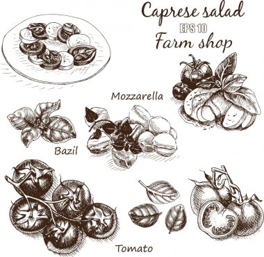 sketch of salad caprese food card