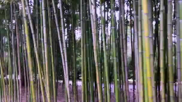 Bamboo, bamboo leaves, bamboo grove, bamboo stalk
