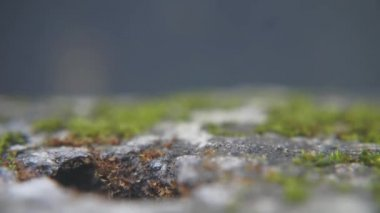 hordes of ants working together carry their food