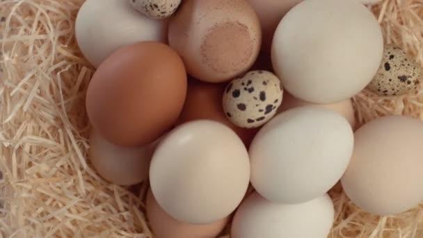 jiný druh vajec v hnízdě válcování. Pohled shora