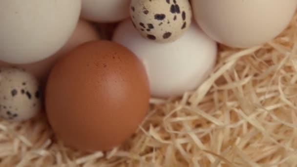 fészek tojással felülnézet