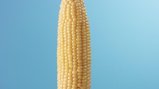 Kukuřičný klas na modrém pozadí