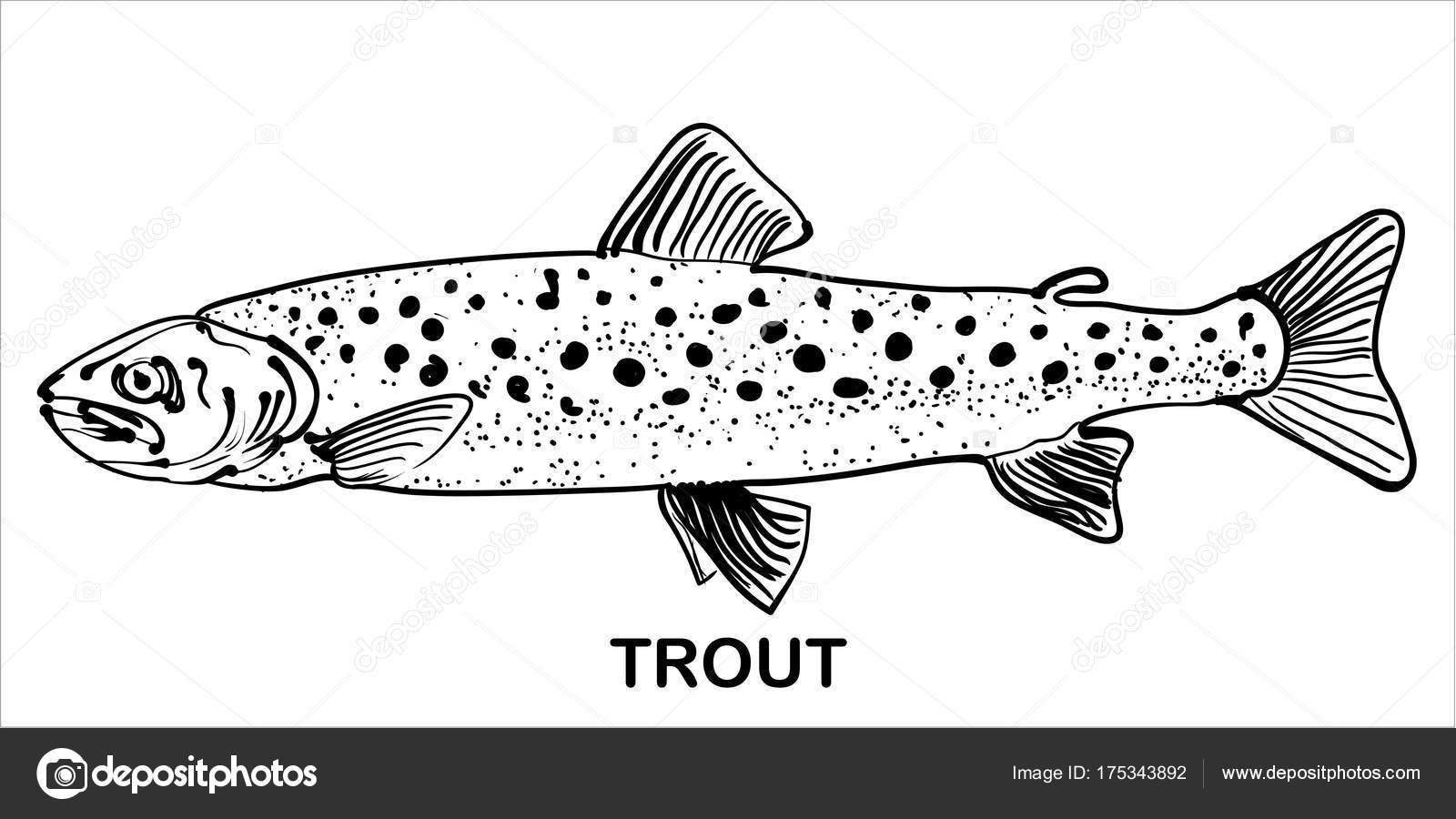 Monochrome Hand Drawn Image Trout — Stock Vector © nikvector20@gmail ...