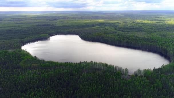 Repül a tó felett ellen erdők lucfenyő és fenyőfák. Dróngyűjtemény