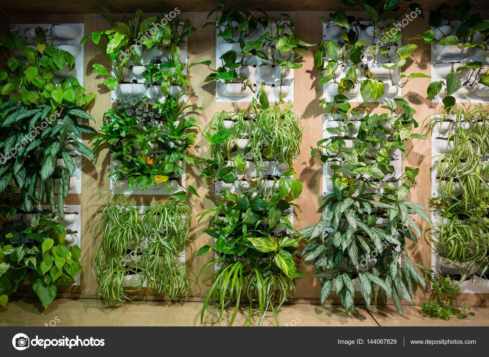 Planten Op Kantoor : Groene planten in kantoor u stockfoto wavebreakmedia