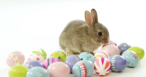 Пасхальные яйца и Пасхальный заяц