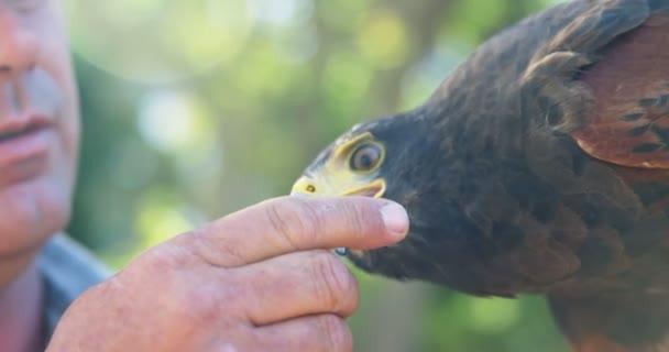 Homme Ensoleillée Journée D'alimentation Aigle Sur Faucon Une YFYrqw