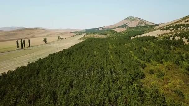 Černé borovice lesní