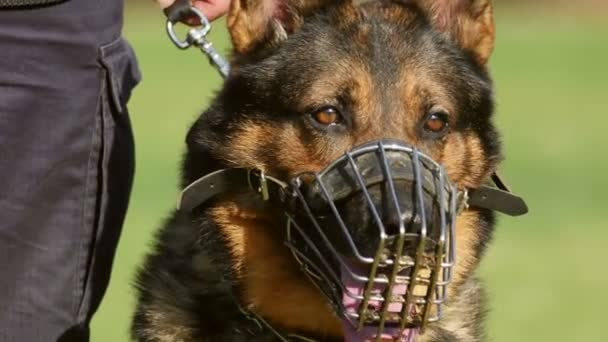 Gendarmerie dog portrait